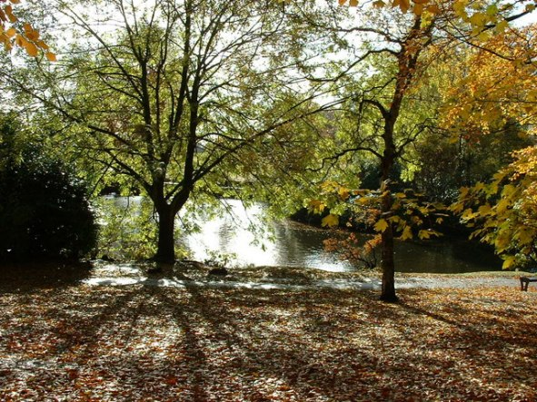 This autumnal scene shows Moseley New Pool in Swanshurst Park, but it has been known by other names in the past, including Swanshurst Lady Pool and Grove Pool. Coldbath Brook was dammed to create the New Pool as a fish pond in or before 1758. In its hey day Swanshurst Park had a boathouse with boats to hire, a pitch and putt golf course, changing rooms for sports, toilets and a cafe.