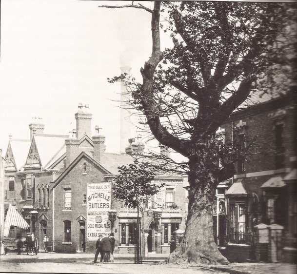 The Selly Oak in Oak Tree Lane in 1908, a year before it was cut down.