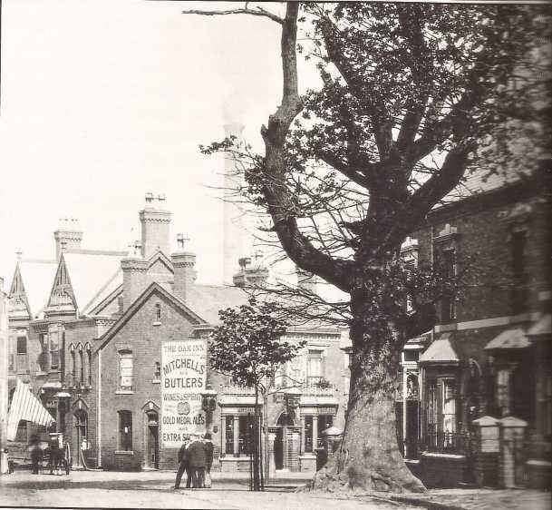 The Selly Oak in Oak Tree Lane in 1908, a year before it was cut down.